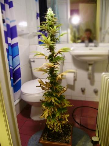 Floración madura