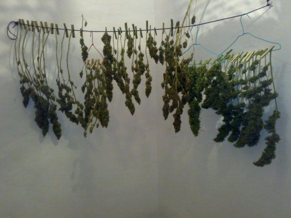 secado-de-marihuana.jpg